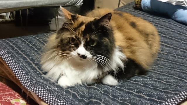 我が家の姫(猫)