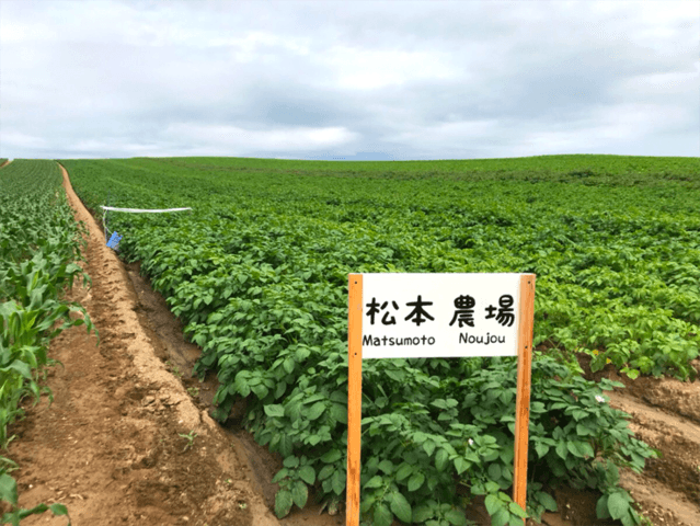 松本農場のじゃがいも畑-クラウドファンディングMakuake