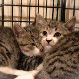 保護猫の兄弟