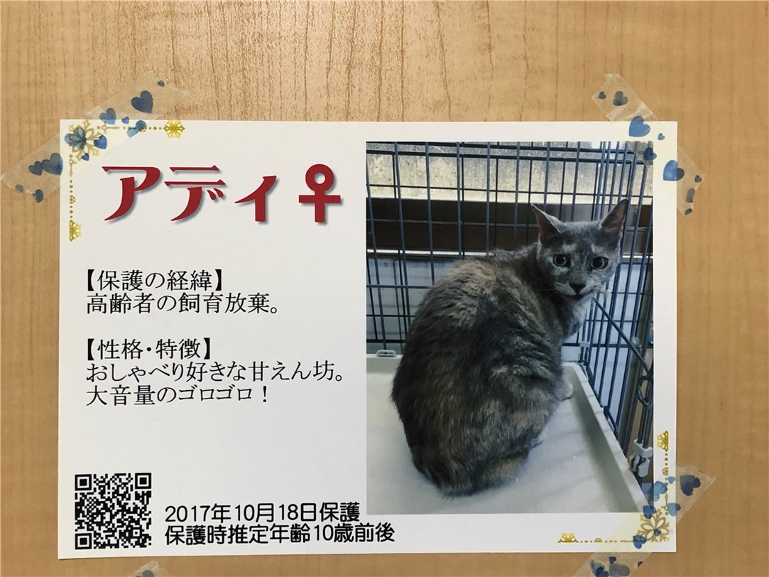 灰色猫のアディちゃん