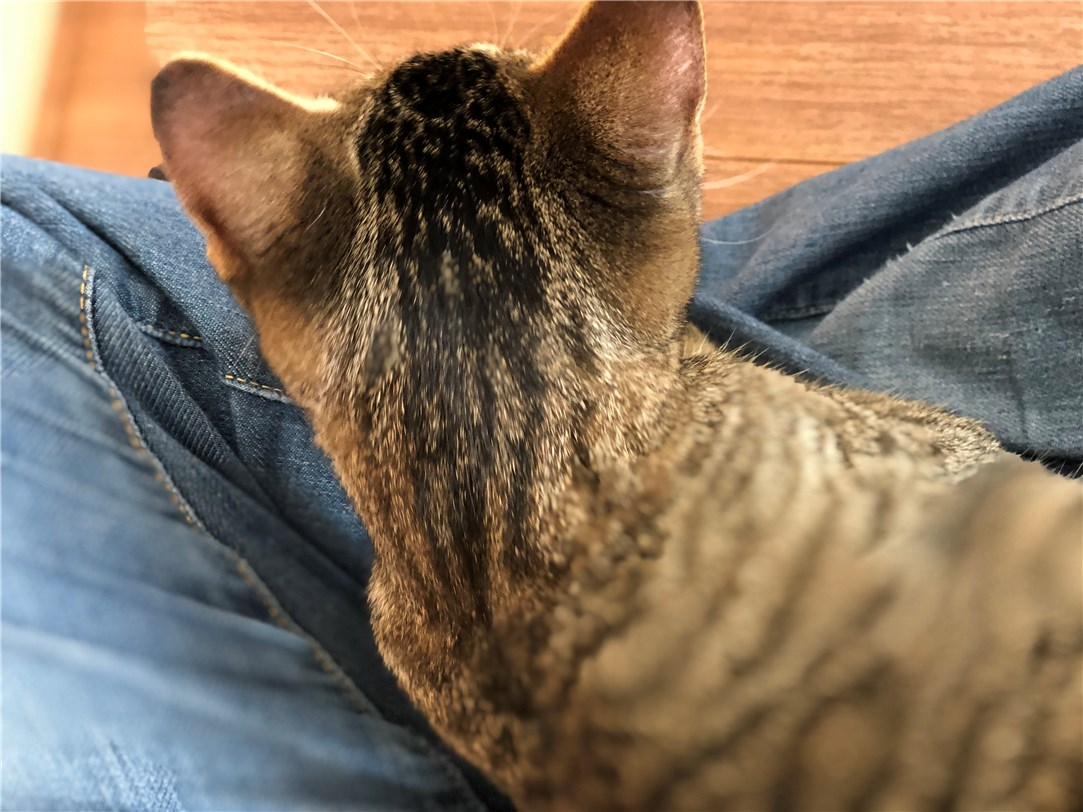 対面して30秒で膝に乗った猫