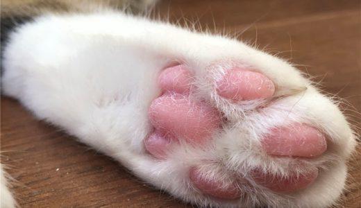 保護猫カフェ「アニマルエイド」の成猫は里親初心者・高齢者にもおすすめの選択肢!