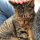ナデナデ大好き!膝の上で至福の猫
