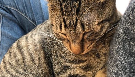 デレデレメロメロのガチハーレム。保護猫カフェ『アニマルエイド』が最高だった!