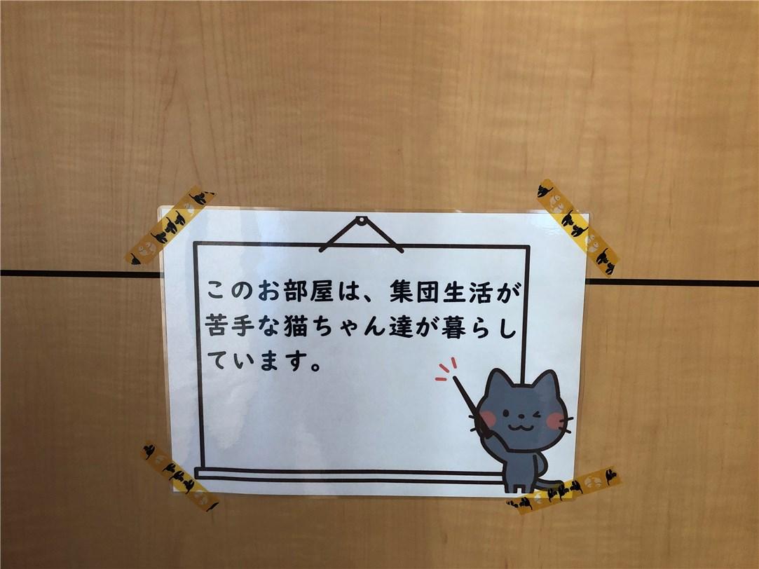 集団生活が苦手な猫がいますという張り紙