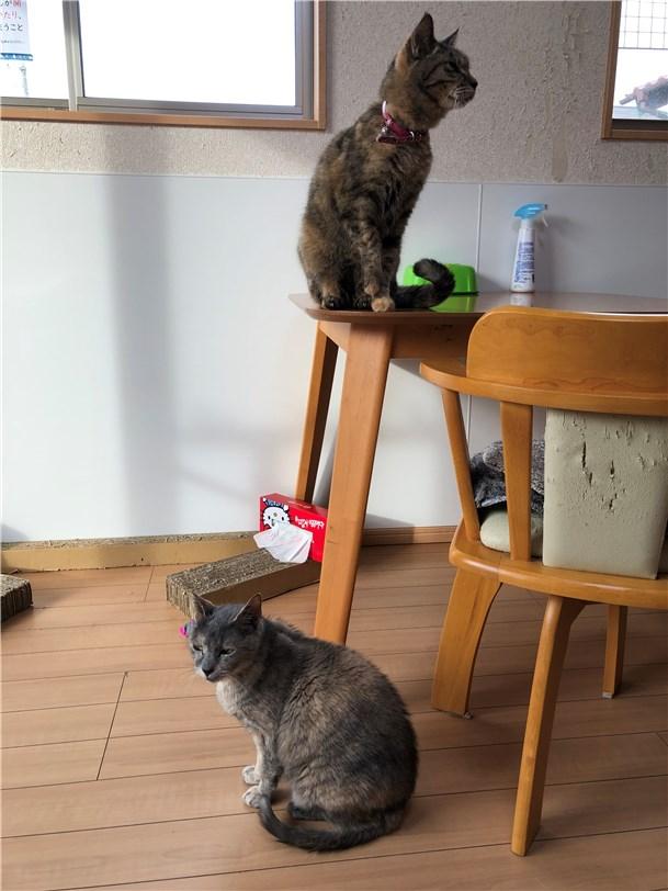 ペットホテルとして滞在中の飼い猫と保護猫