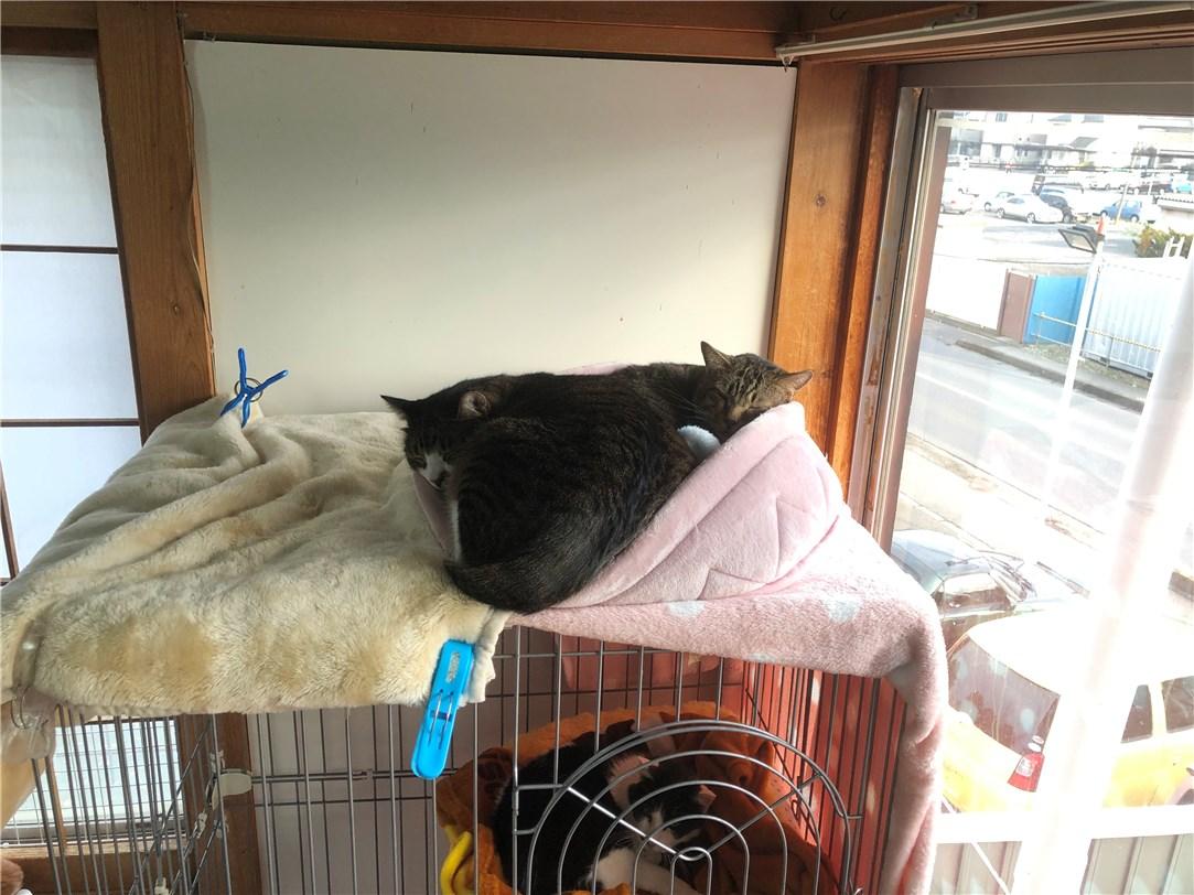 療養中の保護猫