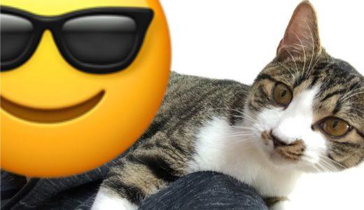 ご報告:アニマルエイドで引き取る猫を決めてきました