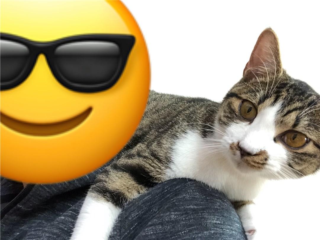 保護猫のロイドくん(あだ名)