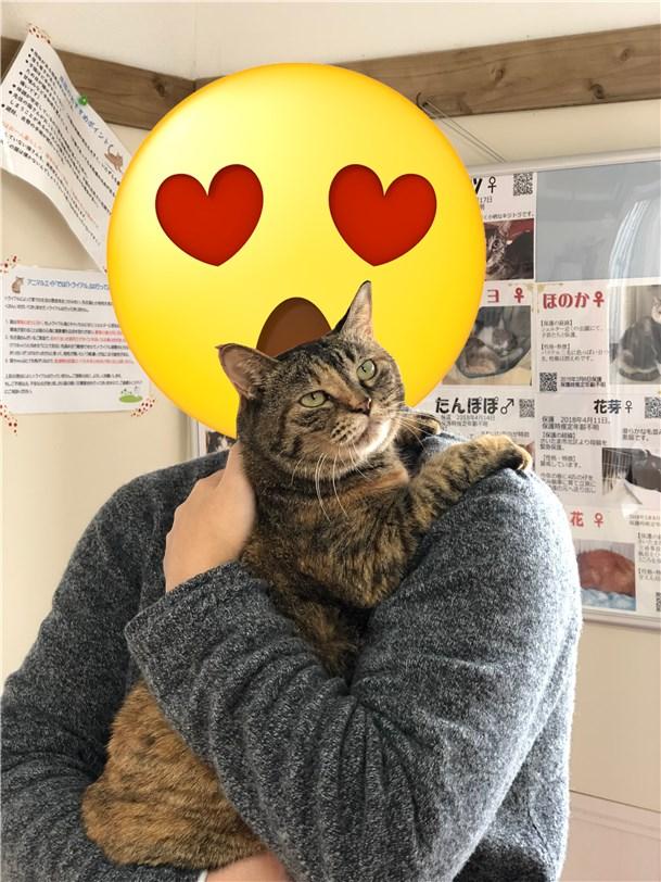 デブ猫を抱っこ