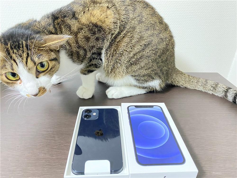 iPhone12mini開封時に猫が寄ってきた
